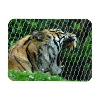 Sumatran Tiger Rectangular Photo Magnet