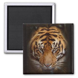 Sumatran Tiger Wildlife Big Cat Lover Photo Fridge Magnets