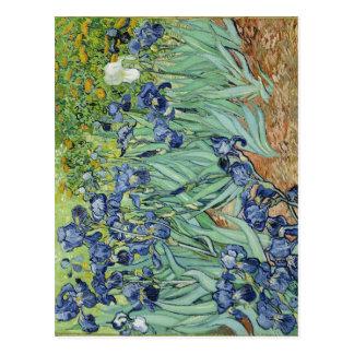 Summary Van Gogh's Irises center expired implement Postcard