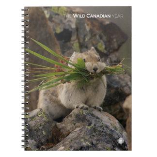 Summer - American Pica Notebook