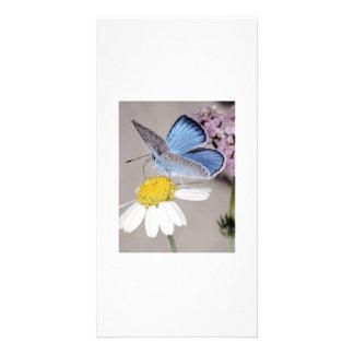 Summer breeze customized photo card
