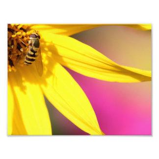 Summer Colours Photo Art