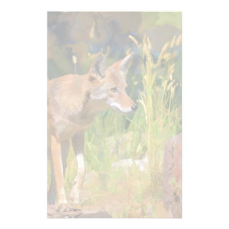 Summer Coyote Wildlife Painting Custom Stationery