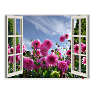 Summer Day, Dahlias in Bloom Post Card