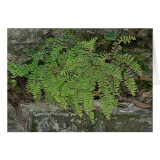 Summer Fern Card