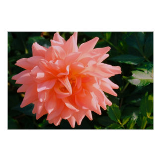 Summer Flower Bloom Poster