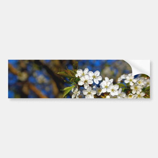Summer Flower Bumper Sticker