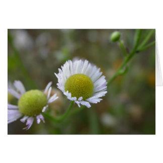 summer flower - dewy aster greeting card