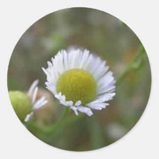 summer flower - dewy aster round sticker
