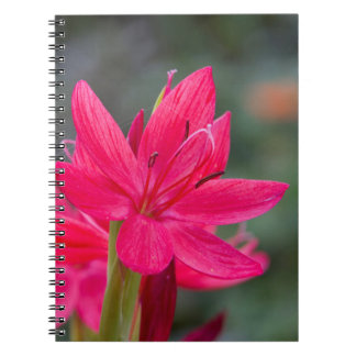 Summer Flower Notebook