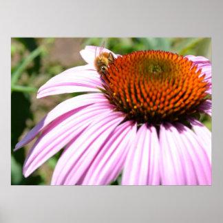 Summer Flower with Bee II Print