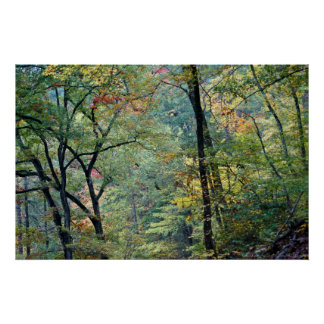 Summer Forest with touches of Autumn Poster