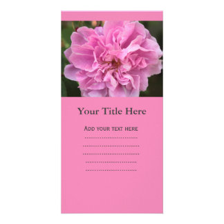summer full blooming pink rose flower. photo cards