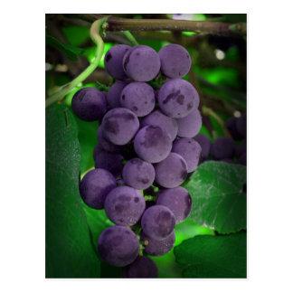 Summer Grapes Postcards