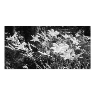 'Summer Lilies' Photographic Print