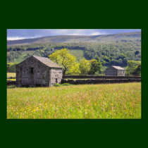 Summer Meadow, - The Yorkshire Dales Photo Print