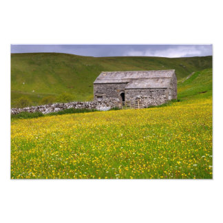 Summer meadow, The Yorkshire Dales Photo Print