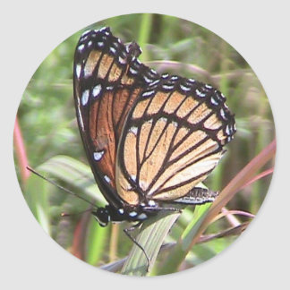 Summer Monarch Butterfly Wing View Sticker
