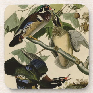 Summer or Wood Duck Drink Coasters