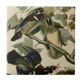 Summer or Wood Duck Tile
