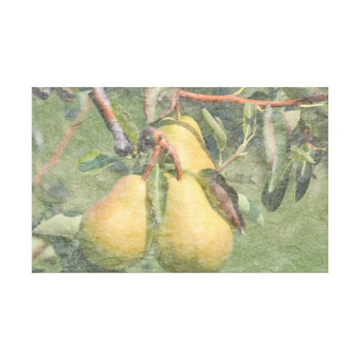 Summer Pears Gallery Wrap Canvas