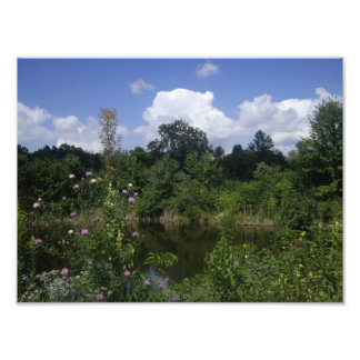 Summer Pond Photo Art