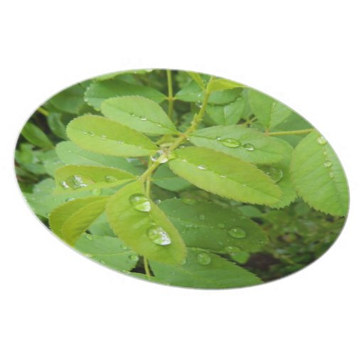 Summer Rain on Plants Party Plates