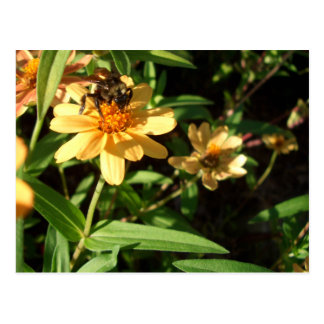 Summer s Day Bee on Sunny Yellow Flowers Postcard