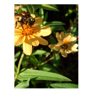 Summer s Day Bee on Sunny Yellow Flowers Post Card
