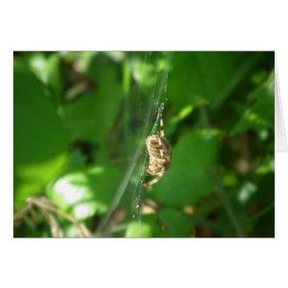 Summer Spider Card