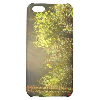Summer Sun in Central Park, New York City Cover For iPhone 5C