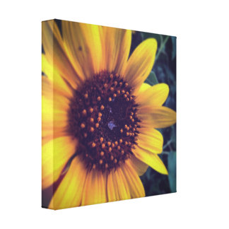 Summer Sunflower Canvas Print