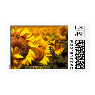 Summer Sunflowers 2 Postage Stamps