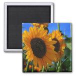 Summer Sunflowers Refrigerator Magnets