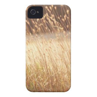 Summer Sunset Field Grass iPhone 4 Case-Mate Cases