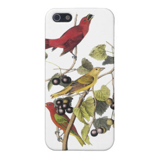 Summer Tanager by John Audubon Case For The iPhone 5