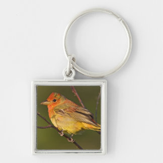 Summer Tanager Piranga rubra) young male Silver-Colored Square Key Ring