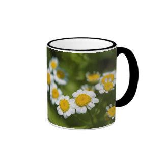 summer to savour ringer mug