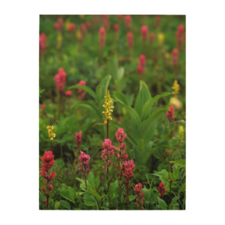 Summer Wildflowers Send Forth A Riot Of Color Wood Print
