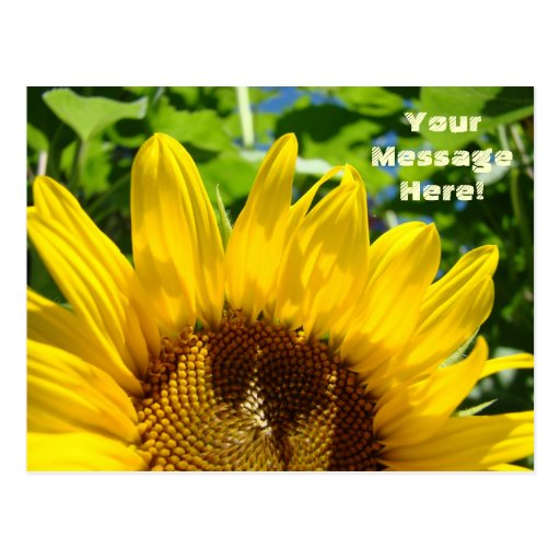 Summer Yellow Sunflower Postcards Sun Flowers