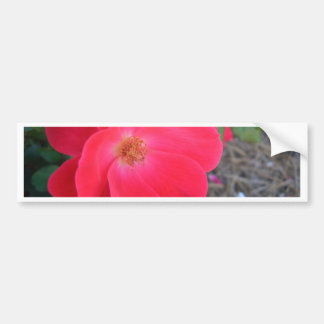 Summer's Red Rose CricketDiane Designer Bumper Sticker