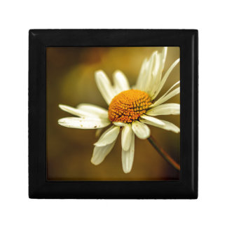 Summertime Daisy Small Square Gift Box