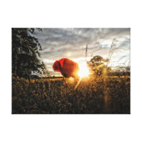 Summertime Poppy Canvas Print
