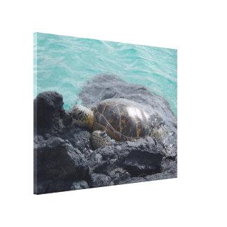 Sun basking sea turtle Kiholo Bay Hawaii canvas Stretched Canvas Prints