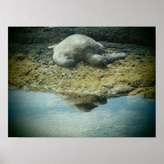 Sun bathing Hawaiian sea turtle poster