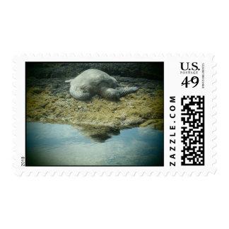 Sun bathing sea turtle postage stamp