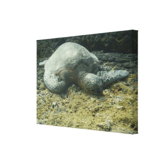 Sun bathing sea turtle scenic canvas stretched canvas prints