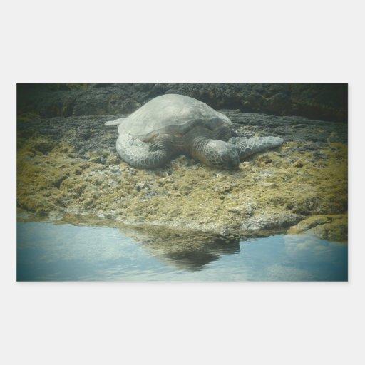 Sun bathing sea turtle stickers