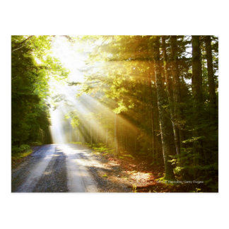 Sun Beams Through Forest in Acadia National Park Postcard