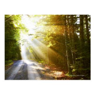 Sun Beams Through Forest in Acadia National Park Postcard